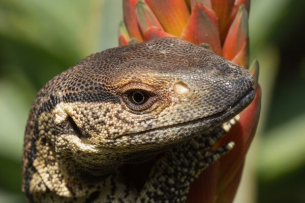 reptile-photography-12082018-48