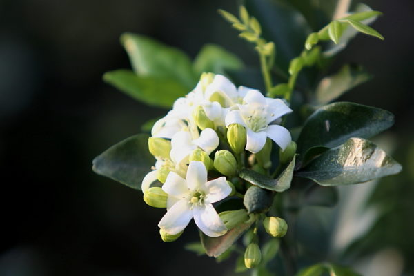 jasmin-love-the-smell