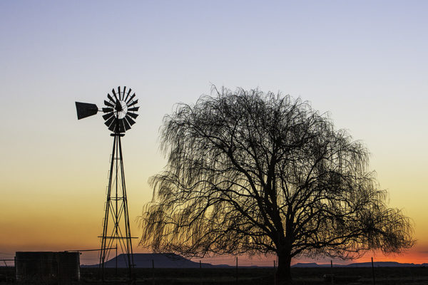 windmill-and-tree