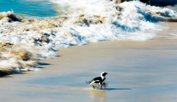 flapping-in-the-surf