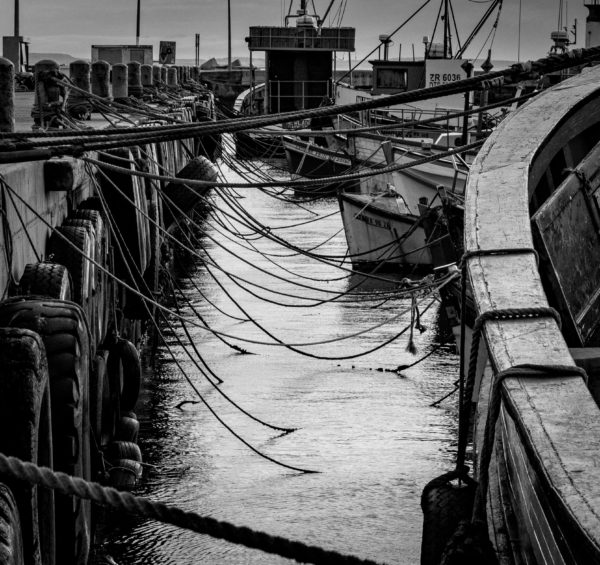 roped-in-the-harbour